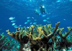 snorkeling-300x214 (1)